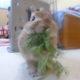 うさぎが食べても良い野菜、食べてはダメな野菜 家の子はお野菜が大好きっ